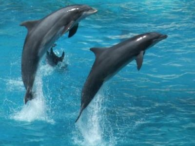 DOLPHIN WATCHING ONE DAY TRIP IN OMAN