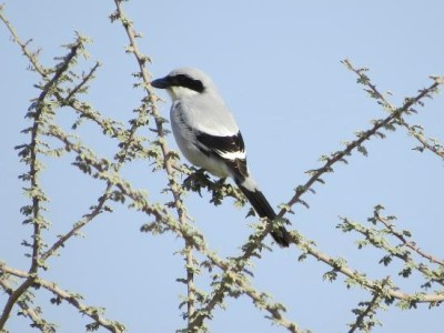 MUSCAT BIRD WATCHING TRIP