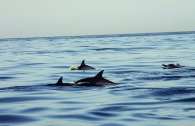 DOLPHIN WATCH & SNORKELLING DAY TRIP